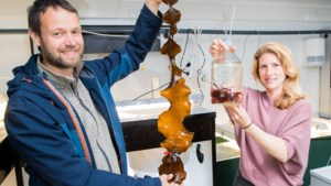 """UGent oogst als eerste eetbare wieren: """"We dromen van Noordzee vol zeewierboerderijen"""""""