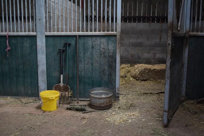 Niet mestgas, wel hartfalen werd landbouwer fataal in varkensstal