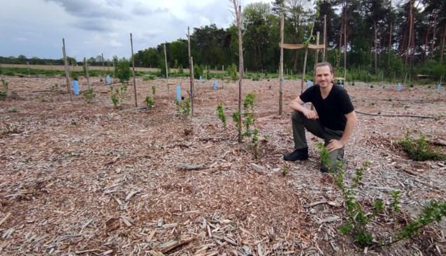 Marcus kocht een dood sparrenbos in Pelt en bouwde het om tot een 'voedselbos'