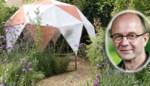 Lekker voor in de wijn of natuurlijke zeep: deze planten zijn je beste vrienden bij het kamperen