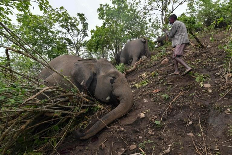 18 olifanten dood teruggevonden in India: alles wijst op blikseminslag