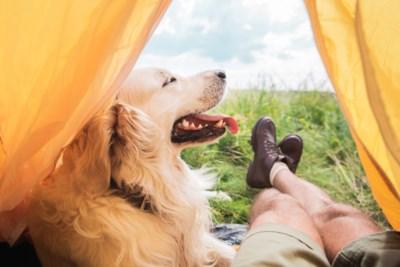 """Niets zo leuk als kamperen met je hond, als je het goed doet: """"Het betekent extra plannen en uitzoeken"""""""