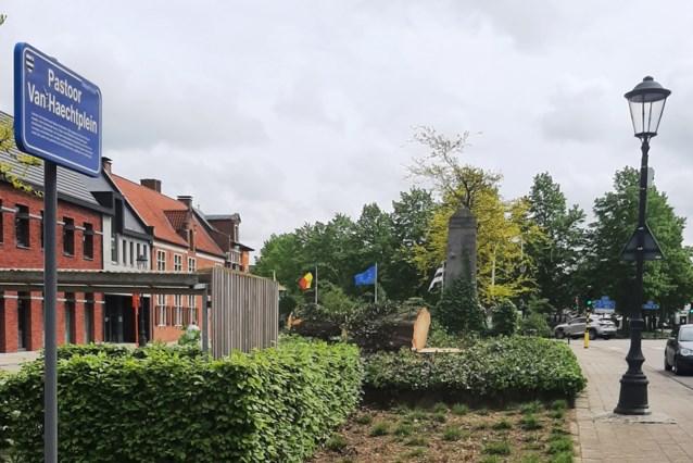 90-jarige rode beuk geveld in centrum van Meerhout
