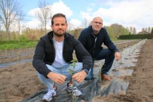 """Gentse familie begint eigen olijfgaard: """"In het zuiden is het soms te warm voor een goede opbrengst"""""""