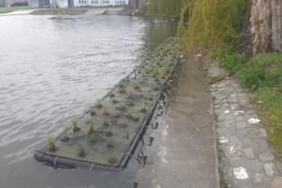 Drijvende groeneilanden moeten zorgen voor meer leven in Gentse wateren
