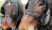 Oudsbergen bundelt paardenroutes op gratis ruiterkaart