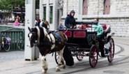 """Ook paarden uit lockdown voor ritjes door Gent: """"Er zijn wat coronakilo's bijgekomen"""""""
