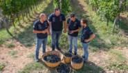 De wolfpack onder de wijnproducenten