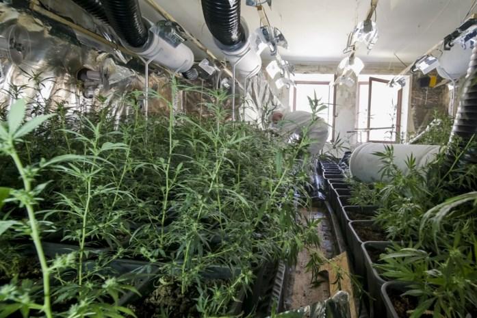 Wietplantage geruimd in Opglabbeek: dertiger uit Hasselt in cel