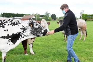Vleespakketten recht van Essense boer voor 'Kom op Tegen Kanker'
