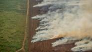 Nu al recordaantal hotspots bosbranden in Amazonewoud