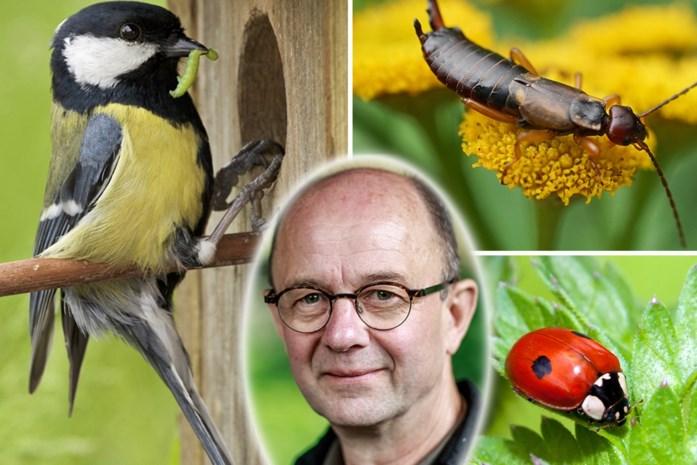 Beestjes op je tuinplanten? Deze alternatieven zijn er voor gif