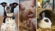 Nieuwe dierenwet zet Nederland in rep en roer: wat is er aan de hand?