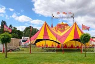 WIN. Circus Barones is terug van weggeweest en komt naar Brasschaat (en jij kan er gratis bij zijn)