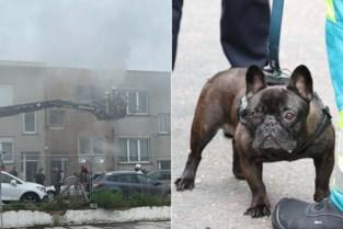 Hond slaat alarm bij brand: bewoners worden wakker van geblaf en kunnen nog vluchten