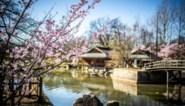 Japanse Tuin boekt beste seizoenstart ooit