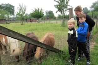 """Bezoek aan de dieren van 't Gulderijtje is niet langer gratis: """"Klein vandalisme levert veel extra werk en kosten op"""""""