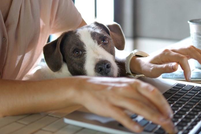 Terug naar het werk gaan? Stress, en dan vooral voor je huisdieren