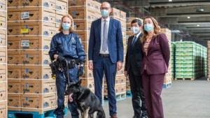 Ook 2021 wordt een recordjaar: dit jaar al bijna evenveel cocaïne onderschept in Antwerpse haven als in heel 2020