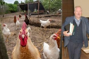 """Zwijndrecht adviseert inwoners om geen eieren meer te eten na PFOS-heisa, buurgemeenten zijn gefrustreerd: """"Triestig dat niemand ons op de hoogte houdt"""""""