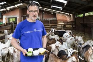Lokerse geitenkaas nu ook erkend als streekproduct