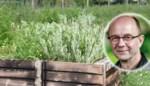 Zo laat je je planten gezond groeien zonder veel werk: de groenman test blackbox gardening