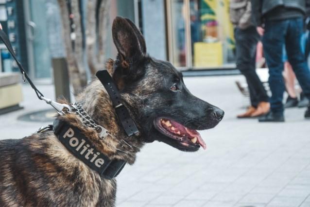 Dronkenlap wil politiehond aaien en belandt in cel met beet in borst