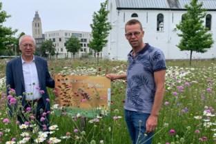 Alerte burger vindt zeldzame orchidee ...die even later al verdwenen is