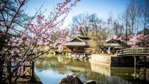Japanse Tuin pakt dit weekend uit met twee filmvoorstellingen