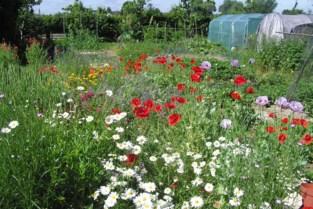 Wandel eens door de tuinen van 'Het Laatste Huis'