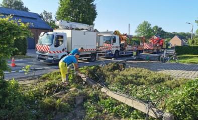 Paula (59) overleeft crash tegen elektriciteitspaal niet