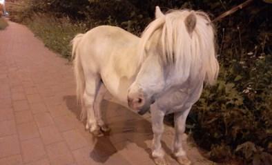 Pony gaat op de loop in het holst van de nacht: eigenaars nog spoorloos