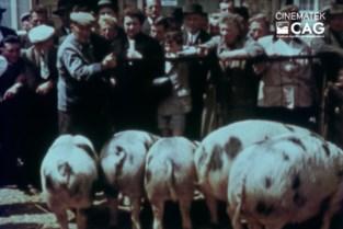 Zwart-wit varken wordt ster van film