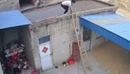 Jongen (2) volgt zijn vader op ladder, maar bengelt niet veel later aan voorlaatste trede