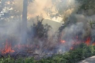 """Twee keer brand in Gentse natuurgebieden: """"Iets kleins zoals een sigaret kan genoeg zijn"""""""