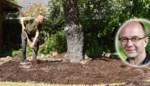 Dank een oude boom niet zomaar af: zo voeg je extra jaren toe aan hun leven