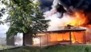 Hevige brand in Nederlands safaripark Beekse Bergen: hoofdgebouw grotendeels uitgebrand
