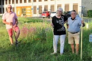 Wonderbaarlijke transformatie Gasketelplein: van stenen woestijn naar kleurrijke bloemenweide