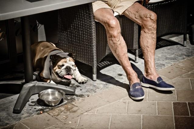 """Ga niet met je hond wandelen op heetst van de dag: """"Hun pootjes kunnen verbranden"""""""