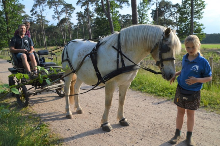 Drieboomkensberghoeve biedt nu ook ponywandelingen met koets aan