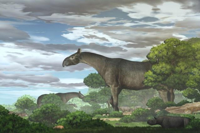 Grootste neushoorn ooit ontdekt die waarschijnlijk ellenlange kilometers gewandeld heeft