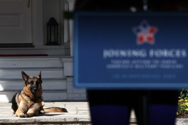 """Hond van Joe Biden overleden: """"Waar wij waren, wilde hij ook zijn"""""""