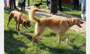 Hondenspeelweide preventief gesloten nadat hond ernstig ziek wordt