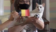 Orakelende kat voorspelt overwinning voor Rode Duivels tegen Finland