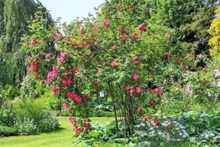 Plantencentrum Arboretum biedt eerste hulp bij klimaattuinieren