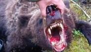 Tiener (16) opgegeten door wilde beer in Russisch park