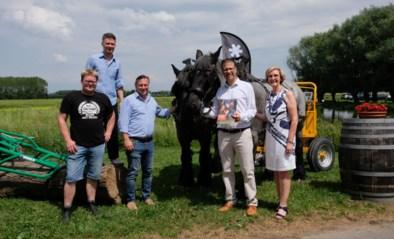 Na babyboom krijgen Brabantse trekpaarden nu ook eigen magazine