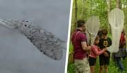 48 zeldzame dieren- en plantensoorten geteld in Vinderhoutse Bossen