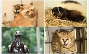 """Dierenwelzijn neemt exotische soorten in beslag bij erkende inrichting: """"Situatie wordt opgevolgd"""""""
