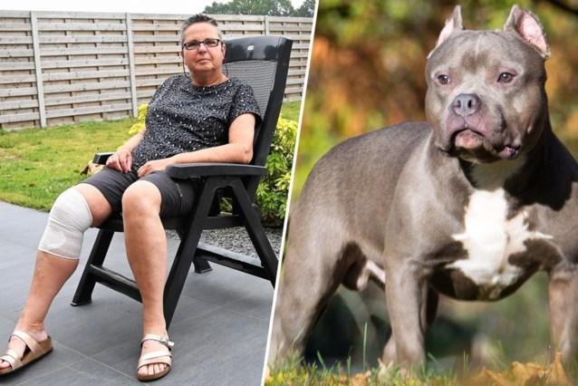 """Vrijwilligster aan schoolpoort aangevallen door vijf honden: """"Kleuters zagen alles"""""""